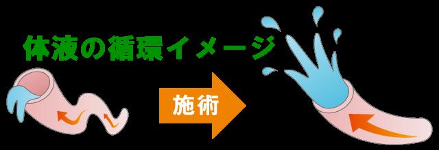 体液の循環イメージ